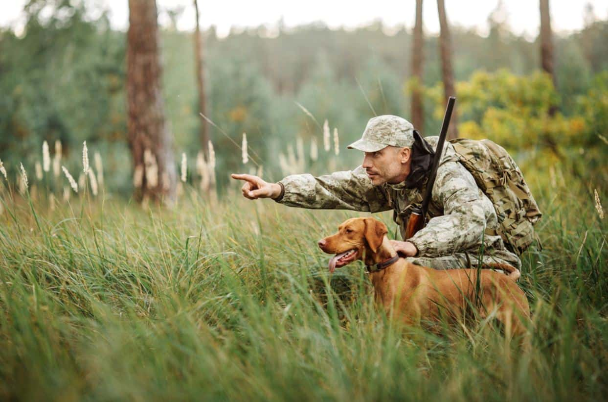 How to Prepare Our Dogs for the Hunting Season