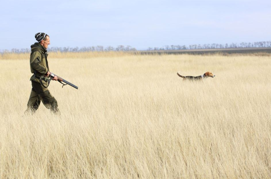 How to Hunt Foxes With a Dog in Haystacks